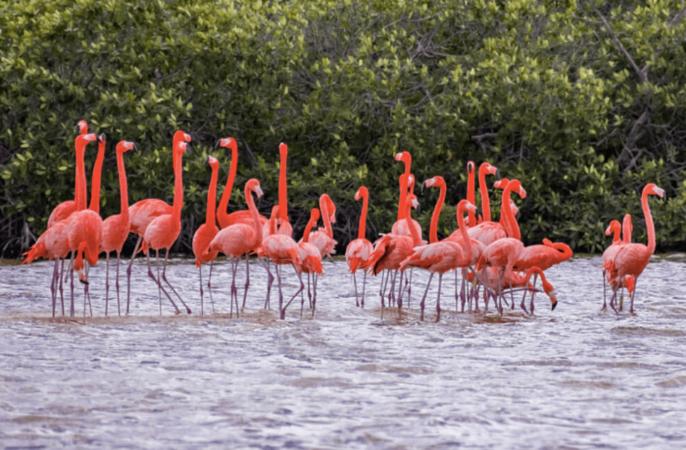 Розовые фламинго Мексика